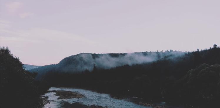 musica per il tempo del bosco